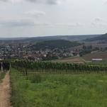 Abstieg nach Frei-Laubersheim